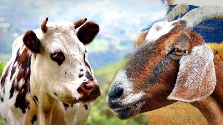 leche mas saludable vaca cabra