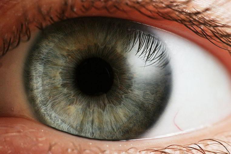 retina sintetica