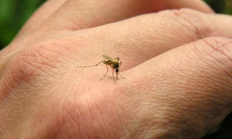 tratar el chikungunya