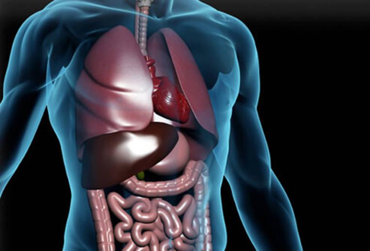 trastornos digestivos mas comunes